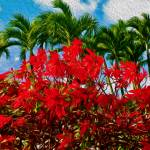 """""""Christmas in Hawaii"""" by lifescaping"""