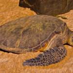 """""""Turtle"""" by lifescaping"""
