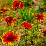 """""""Natures Vibrance"""" by lifescaping"""