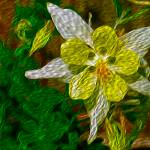 """""""Columbine"""" by lifescaping"""