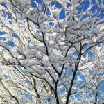 """""""Winter Tree"""" by lifescaping"""