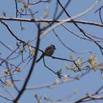 """""""bird"""" by erinlanzendorfer"""