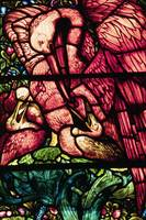 The Pelicans, a stained glass design by Edward Bur