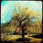 """""""Magical Willow"""" by Tarlyn"""