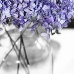 """""""Purple Posies"""" by KameraKat"""