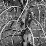 """""""Dead Fir Tree"""" by dkocherhans"""