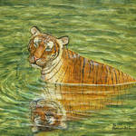 """Peaceful Tiger in Jungle Pool Painting"" by catnip009"