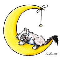 Lunar Love Ragdoll Kitty on White