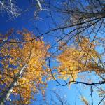 """Fall in Alaska"" by ekewilson"