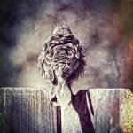 """""""Bird on a Fence"""" by gc_photos"""
