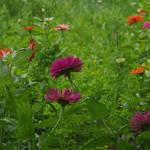 """""""flowers"""" by erinlanzendorfer"""