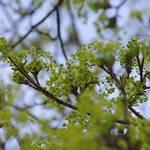 """""""green"""" by erinlanzendorfer"""