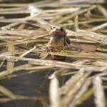 """frog"" by erinlanzendorfer"