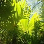 """Fronds"" by anniepics"