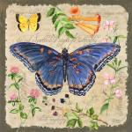 """Blue Butterfly"" by Sharon_himes"