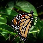 """""""Butterflies Flutter By"""" by MsMelani"""