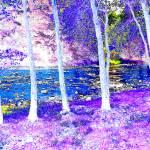 """""""Tree Line by the Stream"""" by privera"""