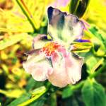 """Wildflower in the Backyard"" by privera"