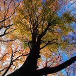"""The tree of life"" by AdrianWarren"
