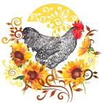 """Plymouth Rock Rooster"" by Sharon_himes"