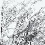 """""""Summer Breeze 0142_b"""" by amynnasser"""