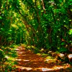 """""""Wedding Path"""" by lifescaping"""