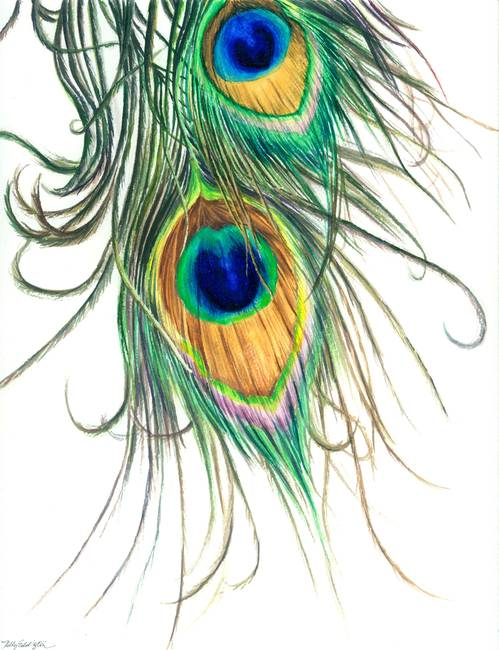 Peacock Feather Watercolor Peacock Feathers