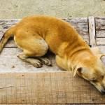 """Dog sleeping"" by ingojez"