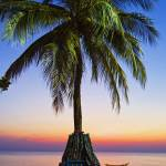 """Palmtree at sunset beach in Thailand"" by ingojez"