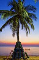 Palmtree at sunset beach in Thailand