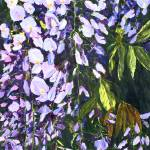 """Wisteria Cascade"" by Sharon_himes"