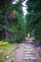 Rocky Mountain Forest Path
