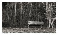 Bench by a Woods
