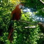 """Parrot"" by alyssabd"