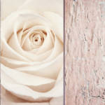 """Ivory & Mauve Rose Collage"" by CoraNiele"