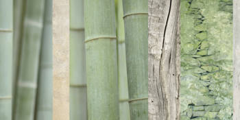 Bamboo Green Collage