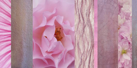 Pink Rose Collage