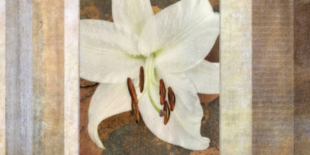 White & Brown Lily Collage