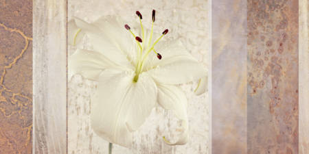 White Lily Collage