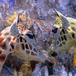 """Blue Cave Giraffes Fantasy for Children"" by LyndaLehmann"
