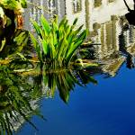 """""""Reflections On A Lily Pond #3"""" by paulcausie"""