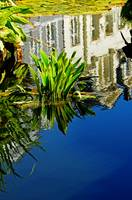 Reflections On A Lily Pond #3