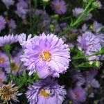 """""""Ballard Gardens Flowers"""" by RODADOD"""