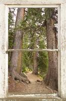 Rocky Mounatins Forest Window View