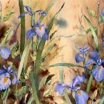 """Riverside Wild Iris"" by Sharon_himes"