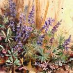 """Wild Blue Lupine"" by Sharon_himes"