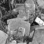 """Forgotten Memories"" by WildAboutNaturePhotography"
