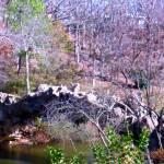 """Petrified Bridge"" by KingsArtworx"