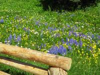 Alpine Flower Meadow
