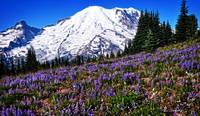 Mt Rainier in the Summer